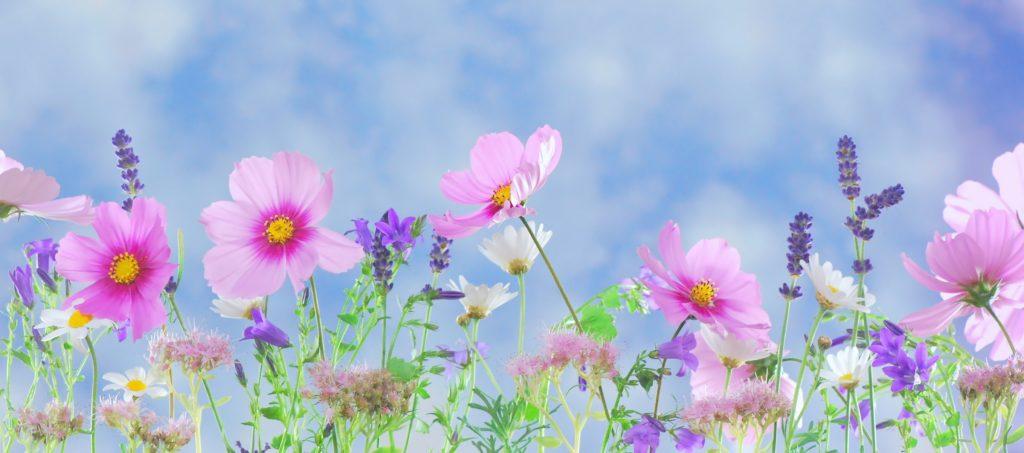 allergies-season-flowers
